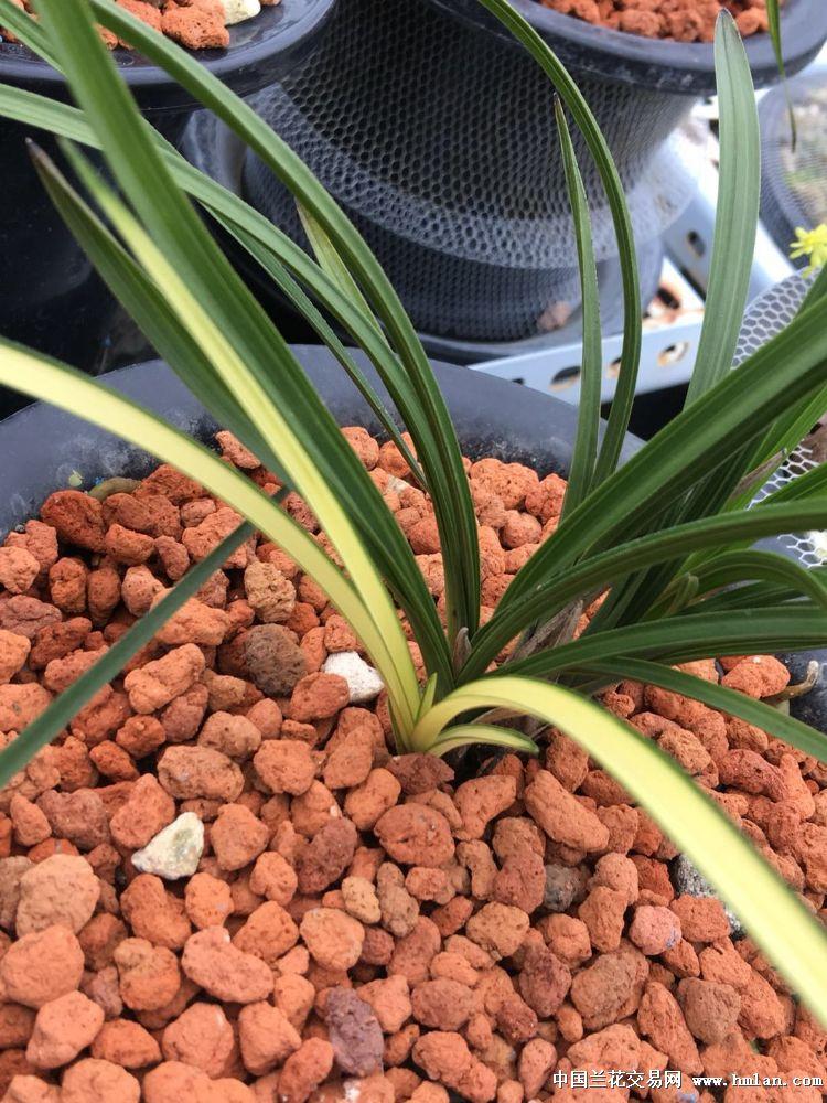 识兰养兰并收集秦岭下山蕙兰,现有蕙兰品种200多个500余盆.本园