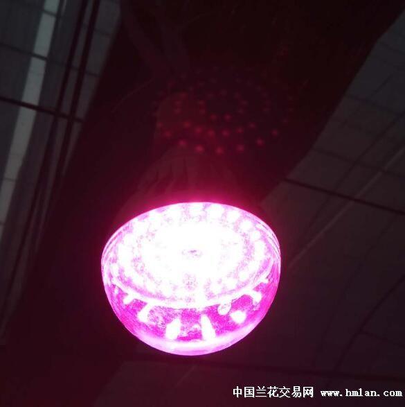补光灯ne555应用电路图