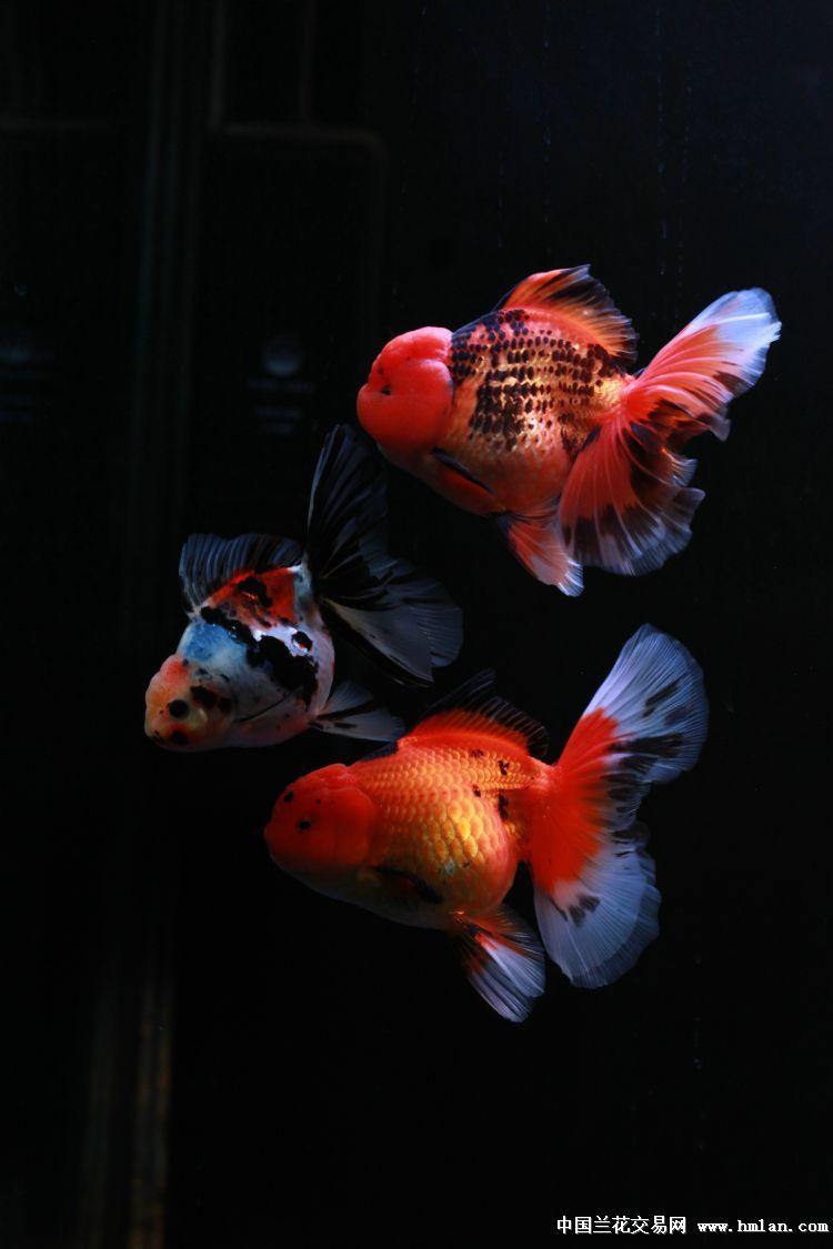 一天到晚游泳的鱼