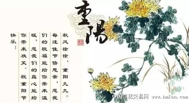 重阳节该吃什么_重阳节与大闸蟹更配呦!-茶余兰后-中国兰花交易网社区